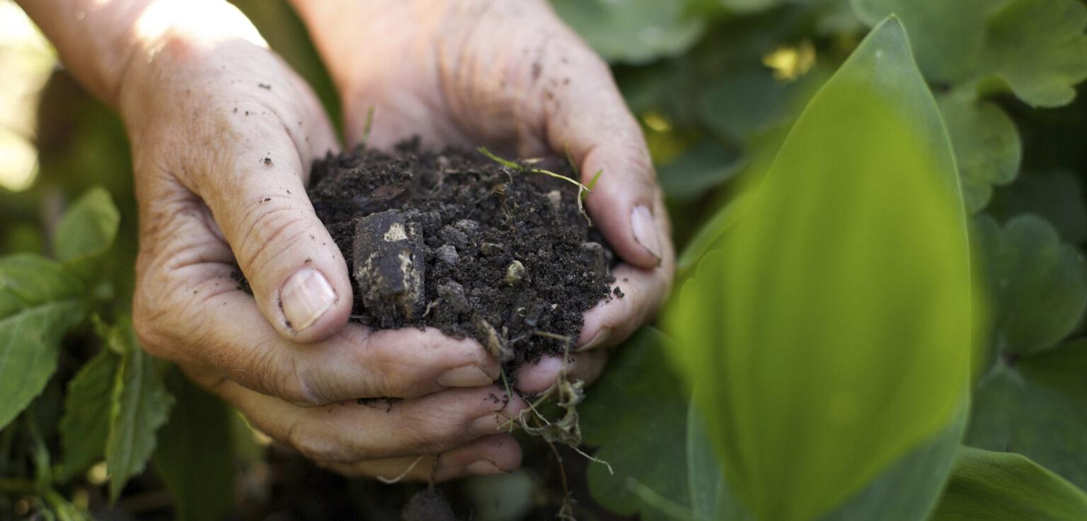 Agricoltura bioogica