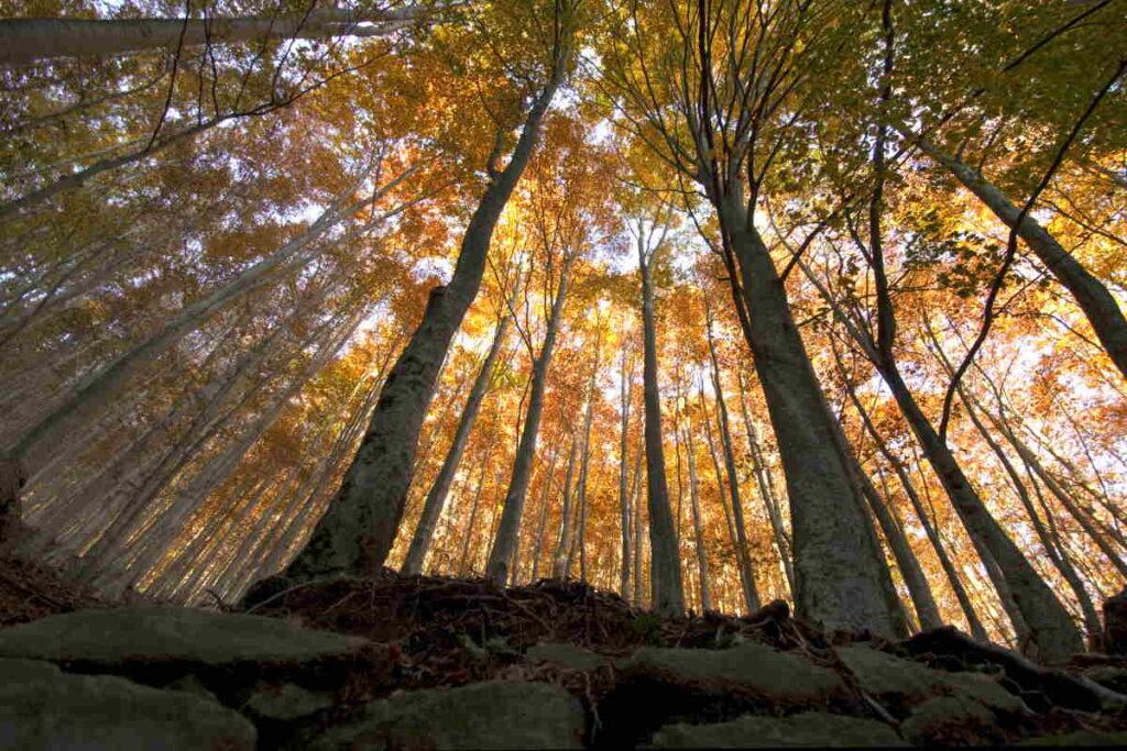 Foto foresta vetusta