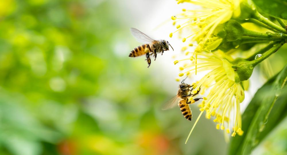 Direttiva biodiversità insetti impollinatori