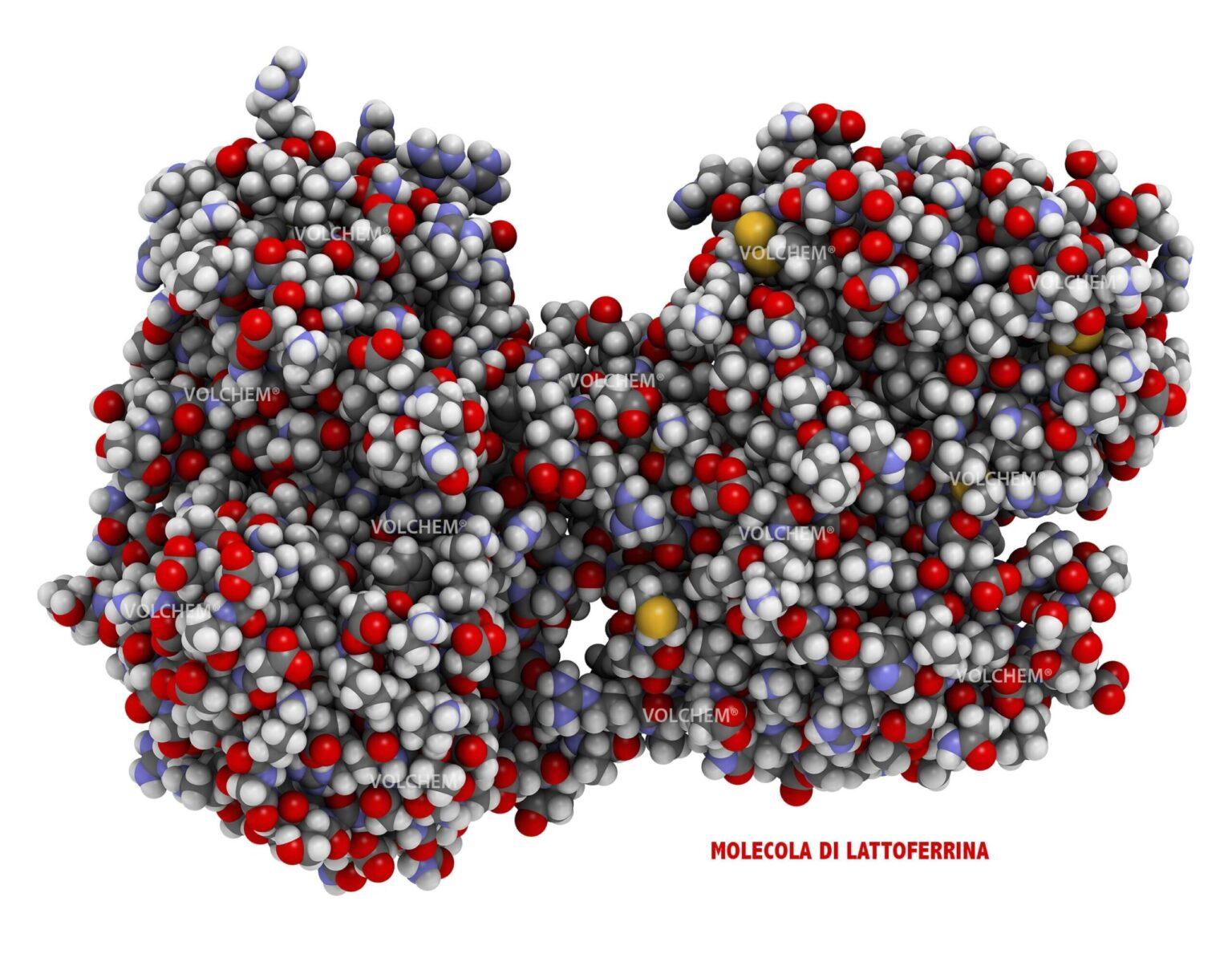 lattoferrina contro covid-19